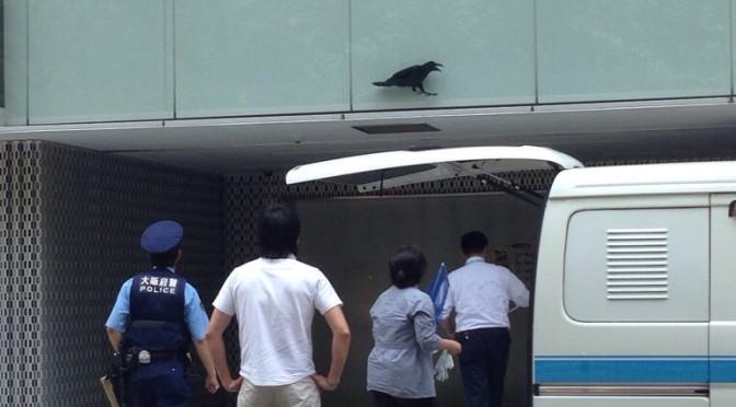大阪堀江公園:二階に挟まったカラスを救出
